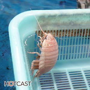 ショボいとは言わせない熱い水族館 #479