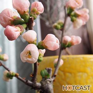 春のプリンター談義 #480