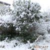 長崎は今年も雪 #627