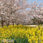 春のヨモヤマバナシ #686